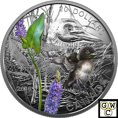 2016 'Common Loon - Baby Animals Color Prf $20 silver 1oz .9999 Fine(NT)(17668)