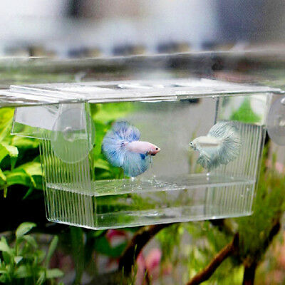 Fish Tank Acrylic Incubator Aquarium Isolation Box Fish Hatching Breeding New