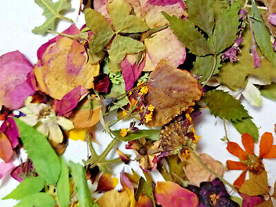 Dried Pressed Flowers Leaves Assorted Art Crafts Potpourri Scrap-booking Cards