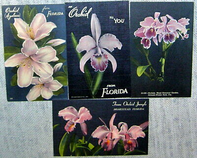 Lot of 4 Florida Orchids Linen Postcards
