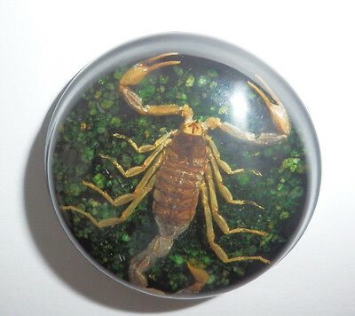 Insect Cabochon Golden Scorpion 38.5 mm Round inner 36mm dark green 5 pcs Lot