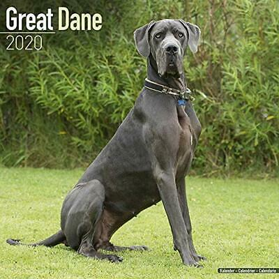 Great Dane Calendar 2020 New Calendar Book