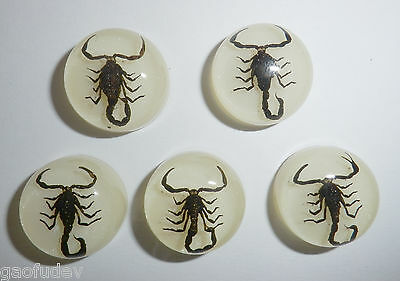 Insect Cabochon Black Scorpion Specimen Round 19 mm on white 5 pieces Lot