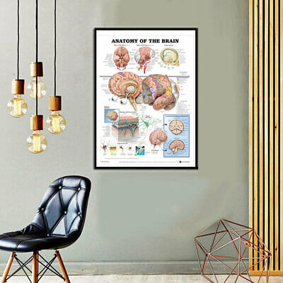 Fashion Anatomy Of The Brain Poster Anatomical Silk Cloth Chart Human Body U #ev