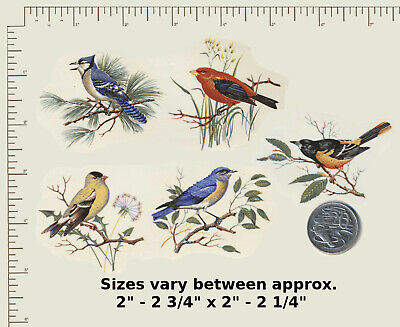 "5 x Waterslide Ceramic decals. Decoupage. Birds on branches approx. 2 1/2""  G10"