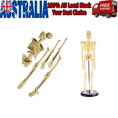 45cm Full Body Human Skeleton Anatomical Medical Model
