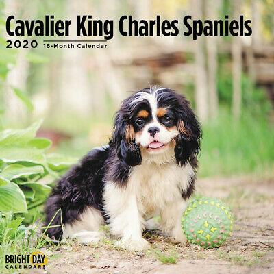 """Warning Overly Affectionate Cavalier King Charles On Duty Wall Sign 5/"""" x 8/"""" Dog"""
