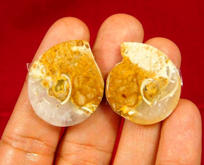 100% Natural Pair Fossil Snail Druzy Agate Loose Gemstone ct 41 26x22mm NG7617
