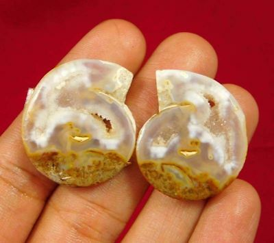 100% Natural Pair Fossil Snail Druzy Agate Loose Gemstone ct 56. 27x22mm NG7639