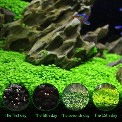 Plant Seeds Fish Tank Aquarium Aquatic Water Grass Decor Moss Leaf Easy Grow