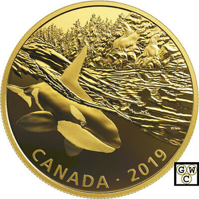2019Orca and Sea Lions-Predator and Prey Golden Reflections'$30Fine Silver(18801