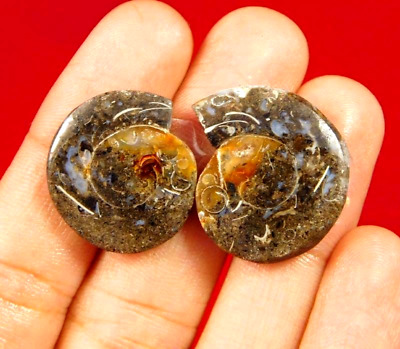 100% Natural Pair Fossil Snail Druzy Agate Loose Gemstone ct 35. 20x19mm NG7624