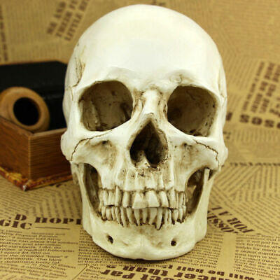 Human Skull white Replica Resin Model Medical Lifesize Realistic 1:1 Halloween T