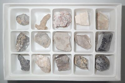 15 Fossil Collection Set in Paper Box FSS15 Education Specimen Kit