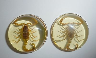Insect Cabochon Golden Scorpion 39 mm Round inner 36 mm Amber clear 2 Pieces Lot
