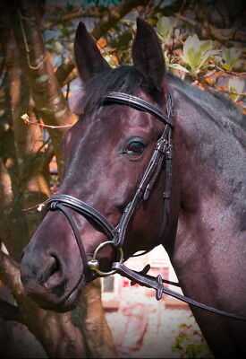 Fancy Raised Comfort Crown Padded Bridle with Fancy Ovation Classic Collection
