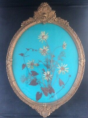 """Ornate Antique Gilt c19th Victorian Gilt Picture Frame with Pressed Flowers 15"""""""