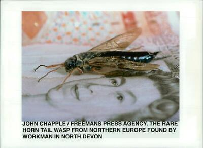 John Chapple and The Rare Horn Tail Wasp. - Vintage photo