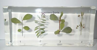4 Types of Leaf Phyllotaxy Set in Clear Block Education Plant Specimen