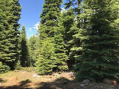 California Land For Sale - Cal Pines Lot .92 Acres With Trees - Modoc County