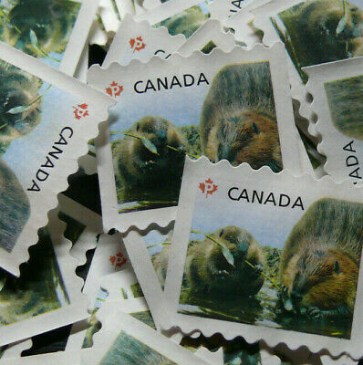 Uncancelled permanent stamps (lot of 50 beavers)