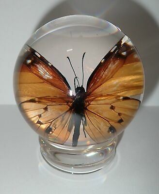 65 mm Sphere Plain Tiger African Monarch Butterfly Glass Shell with Stand