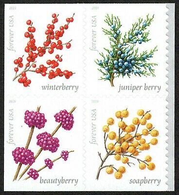 USA Sc. NEW (55c) Winter Berries 2019 MNH bklt. block of 4