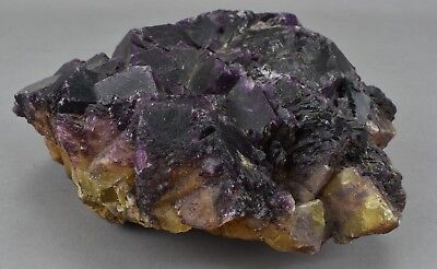 Fluorite Deep Purple and Yellow Museum Quality Very Large Rock 11 Pounds