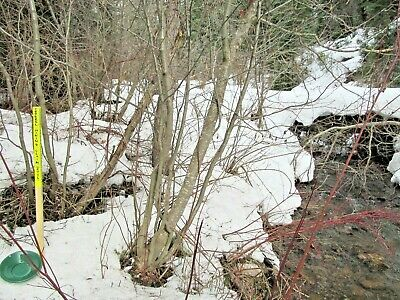 Colorado Gold Mine Prime Mining Taylor Creek Placer Claim Panning Sluice Snipe