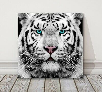 siberian white tiger with blue eyes black and white canvas print wall art