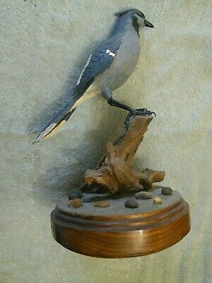 Bluejay Hand Carved & Painted 1995