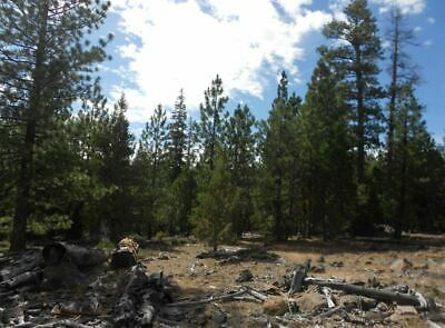 FOR SALE! Northern California Mountain Property! Very Low Price! 0% interest!