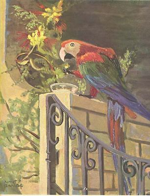 1938 PARROT ILLustrator HARRIET P. GRANDSTAFF bird magazine cover ILLUSTRATION