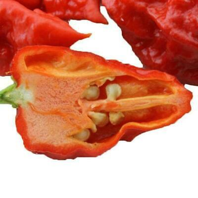 50x Carolina Reaper Seed Red Chili Pepper Selten Viable Extreme Y6O7 Pflan E1M5