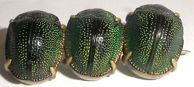 Antique Victorian 3 triple Scarab Brooch Real Egyptian revival Scarab Beetles