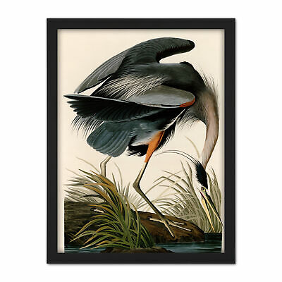 Audubon Birds Great Blue Heron Painting Framed Wall Art Print 18X24 In