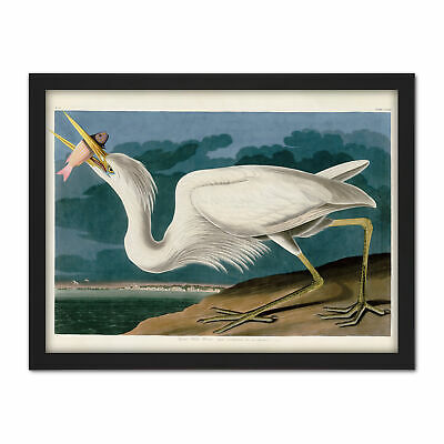 Audubon Birds Great White Heron Painting Framed Wall Art Print 18X24 In