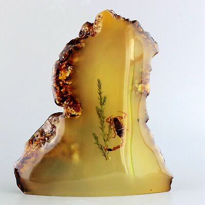 Collect China Amber Internal Inlay Toxic Scorpion Delicate Precious Statue Gift