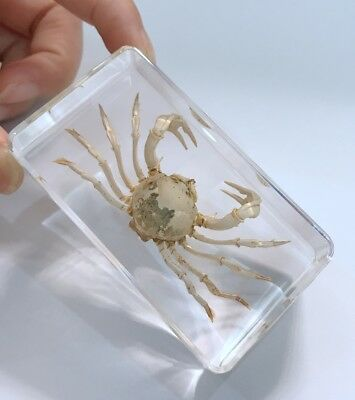 Crab Cancer Zodiac Astrology Large Multicolor Acrylic Pin Brooch Jewelry