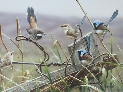 Greg Postle Limited Edition Canvas Wren Print