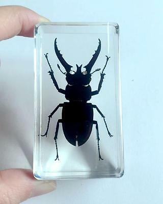 $ 6.50   Lucite Insect Specimen Longhorn Black color style Stag Beetle