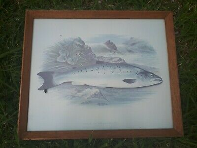 Collectable Framed Life like Pictures Of Fish For Pub Or Angler (SALMON)