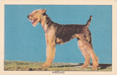 1 Swap Playing Collector Litho Challenge Of The Yukon Dog Card  Airedale Terrier