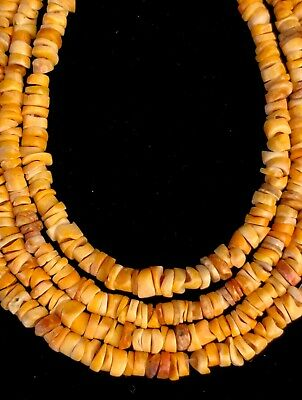 Strand Ancient Pre Columbian Spondyllus Shell Beads Moche or Chimu Indian