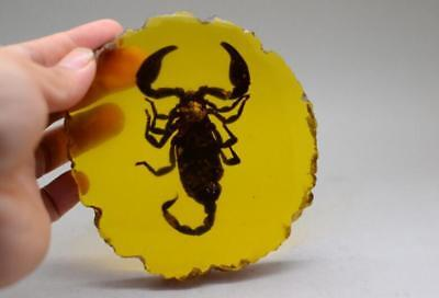 Rare Collectibles Old Decorated Handwork Amber Inside Scorpion Statue