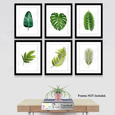 Botanical Prints Plant Leaf Photo Pictures Wall Art Fern Palm Leaves 35 Types