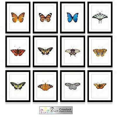 BRITISH BUTTERFLIES CHART POSTER 30x21cm Great Educational Gift Home Wall Decor