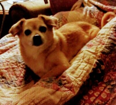 Psychic Reading By Bella (Doggy Dog) in your Messages