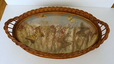 Antique 1920s - 1930s Serviing Tray Inlaid Butterfly Wings Wood & Wicker
