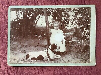 1900's Hunting Dog ~ Young Girl ~ English Pointer ~ Old Antique ~ Cabinet Photo
